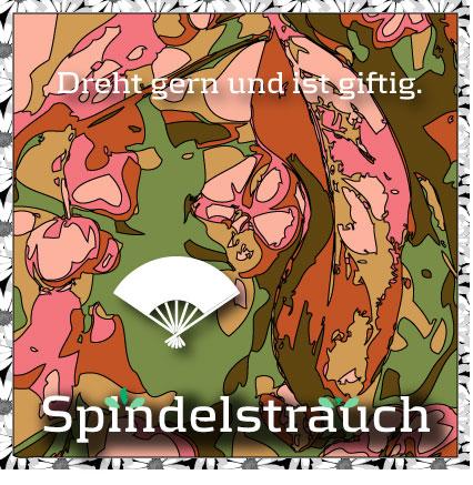 Neues baumWoodch-Feature: Spindelstrauch